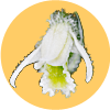 Emblem Spiranthes
